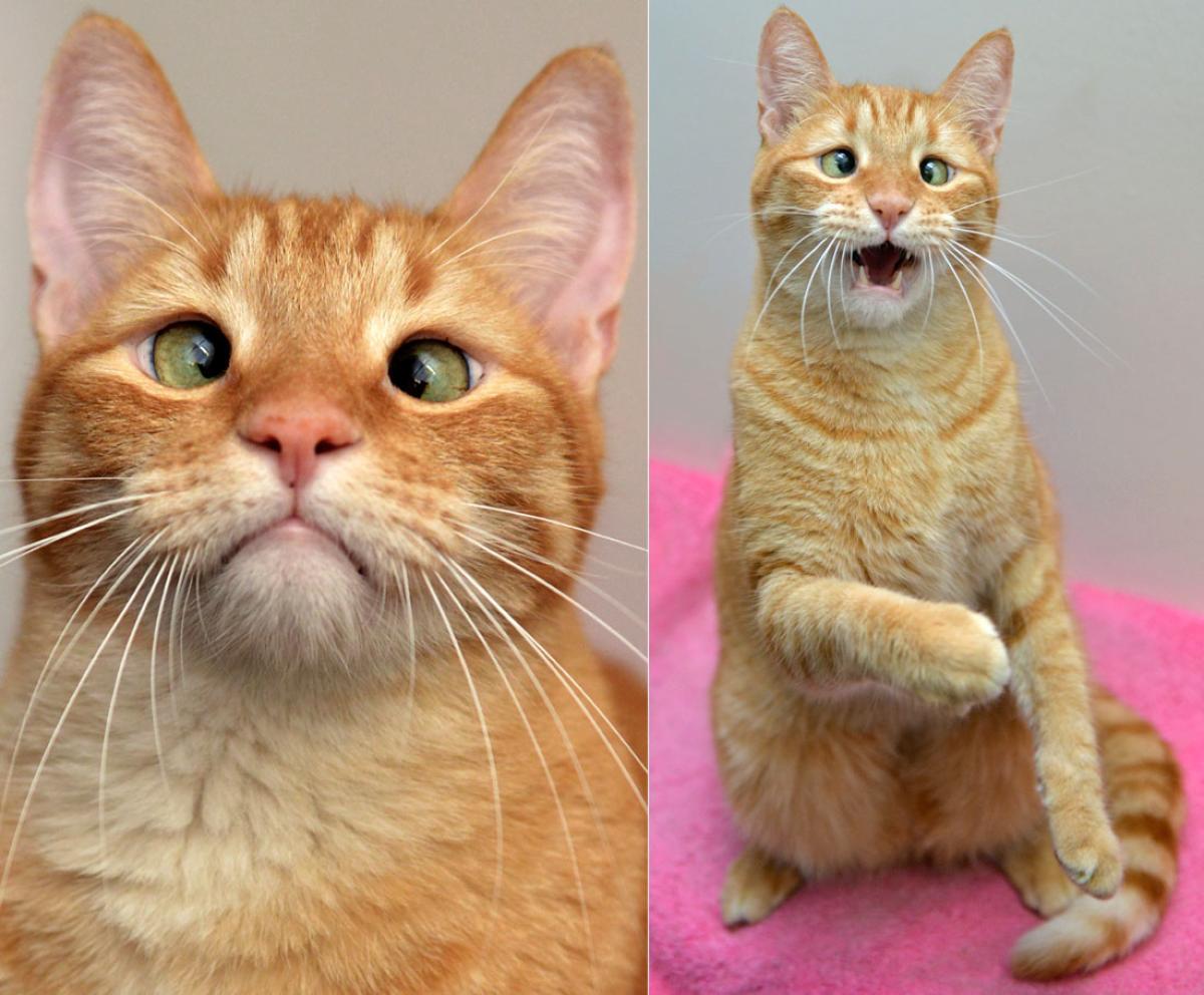 jarvis gatto strabico