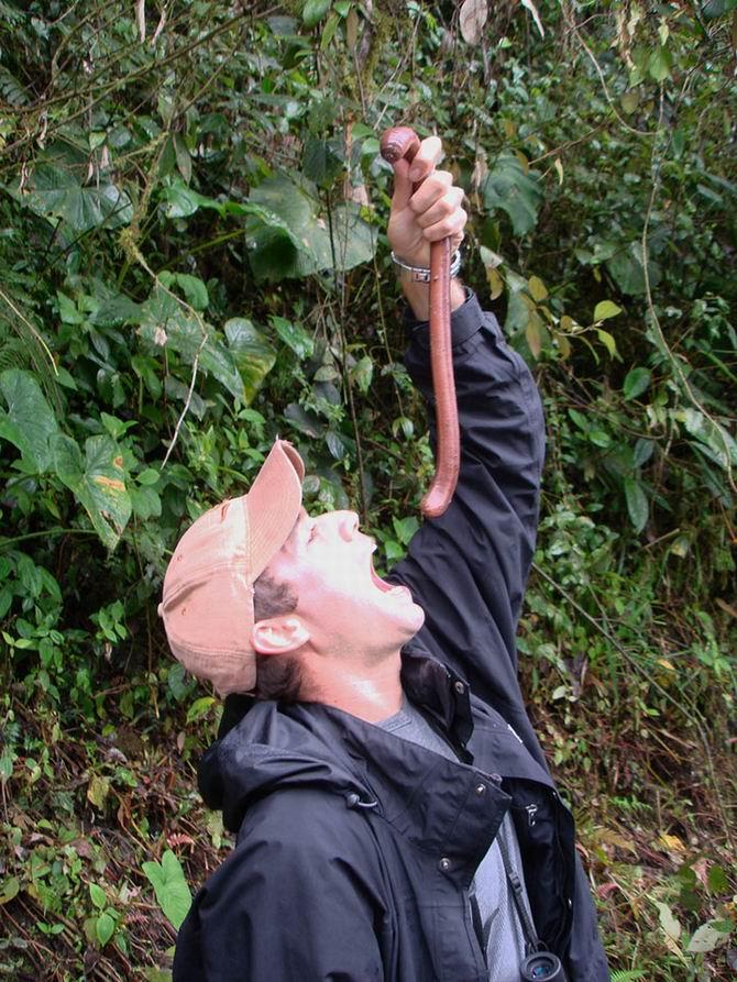 lombrico-gigante