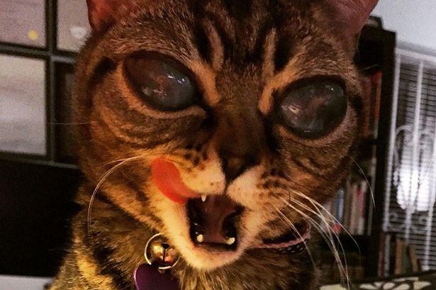 matilda-gatto-alieno