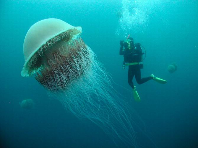 medusa-di-nomura