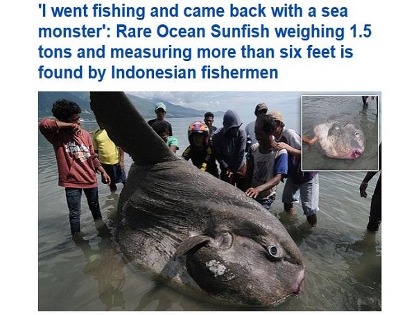 mola-mola-pesce-luna-spiaggiato-indonesia