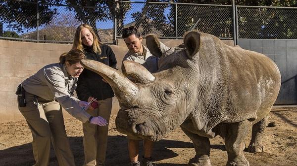 nola-morto-rinoceronte-bianco