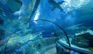 Festa del Papà, a Gardaland SEA LIFE Aquarium una giornata dedicata a padri e figli