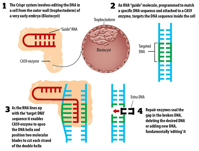 CRISPR CAS9 DNA