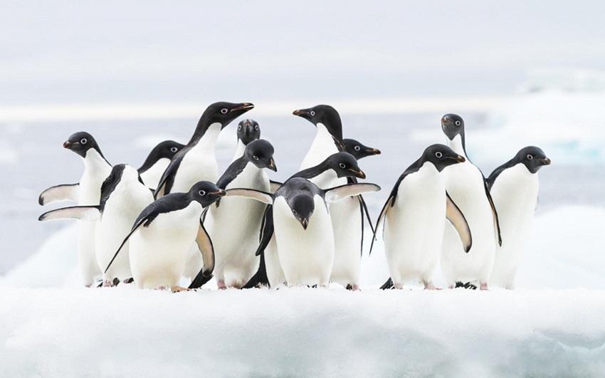 pinguini estinzione
