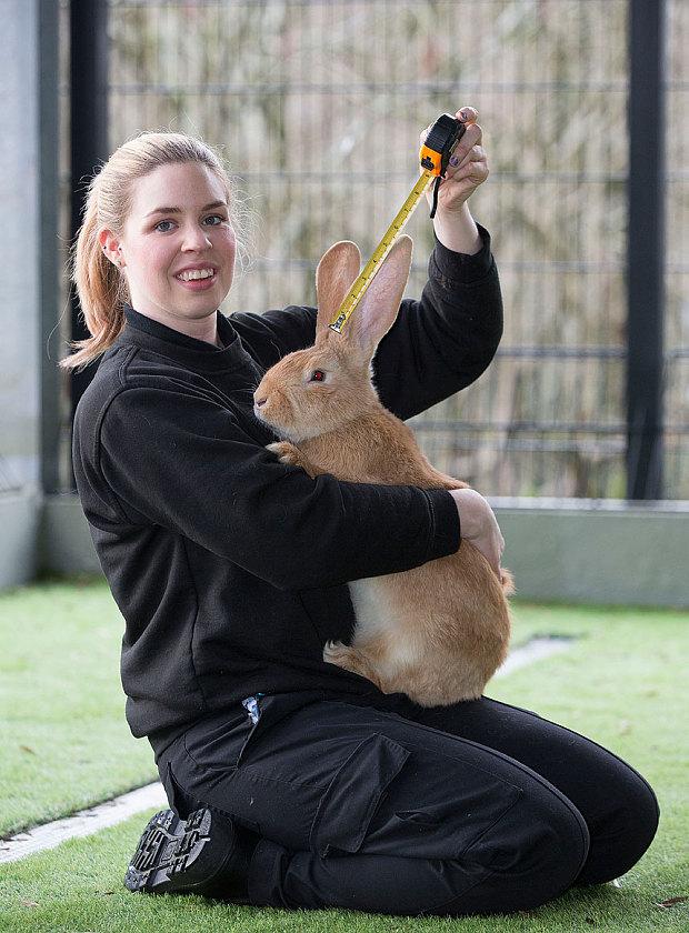 atlas coniglio gigante