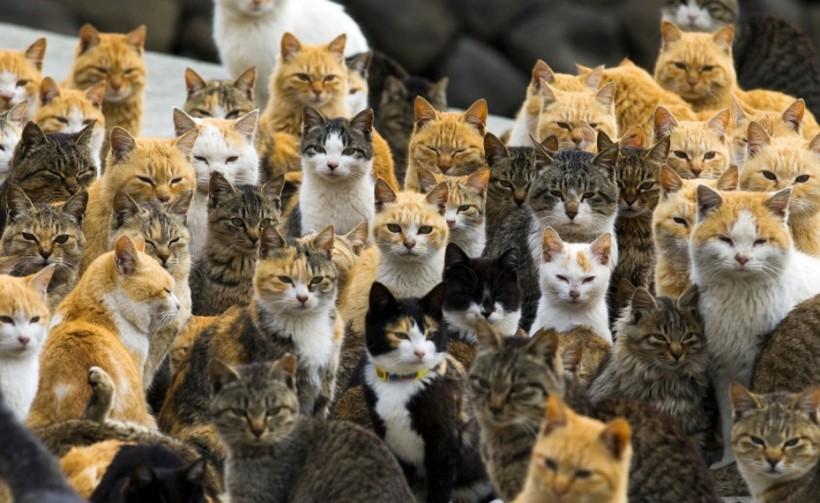 In Giappone c'è l'isola dei gatti: il paradiso felino popolato da un'armata di mici
