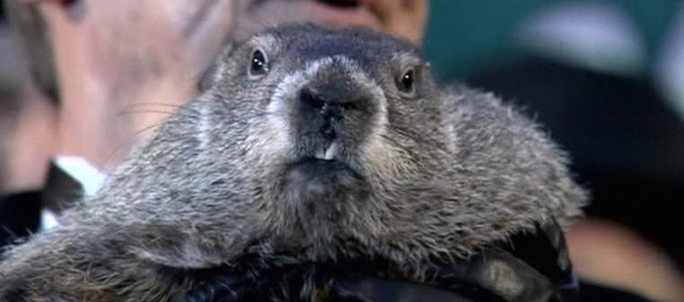 giorno della marmotta phil