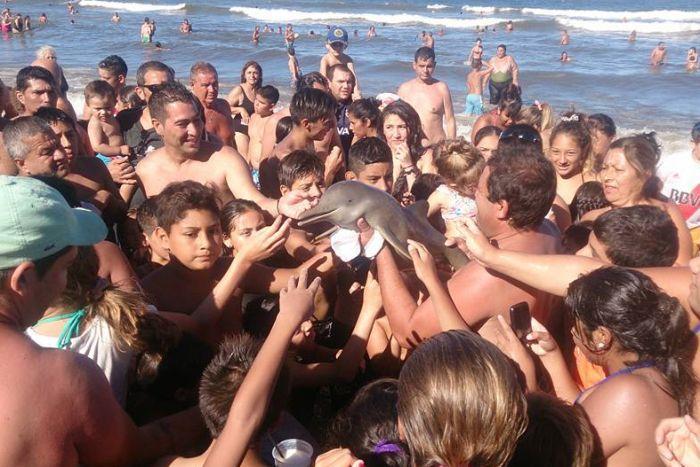 delfino ucciso in argentina