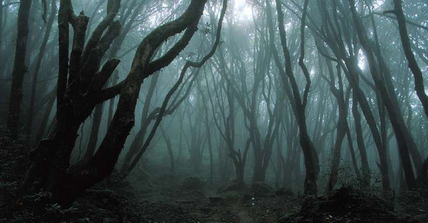 Il leprecauno, calzolaio delle fate. Foresta-dei-suicidi-Aokigahara