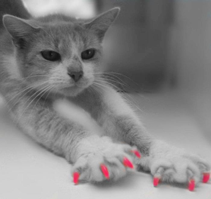 gatto silicone