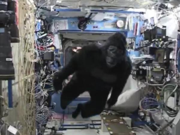 gorilla stazione spaziale iss scott kelly