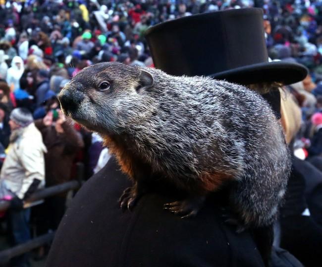 Giorno della marmotta curiosit e aneddoti sulle for Annesso significato