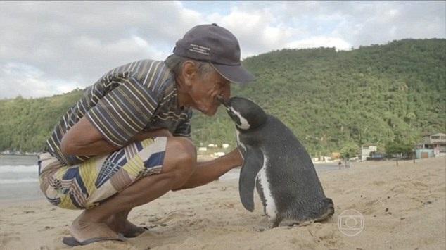 pinguino dindim de souza