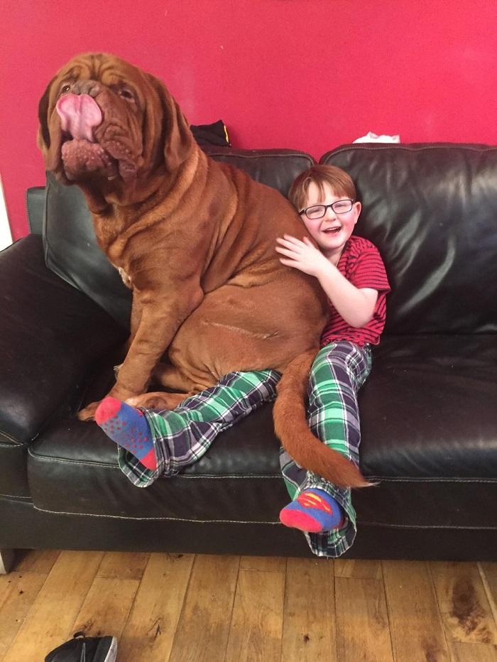 alfie cane