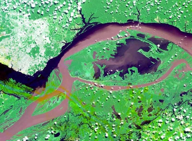 Aster Rio Negro