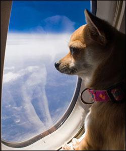 delta cani aereo