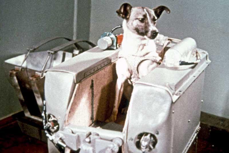 Sputnik 2 Laika (2)