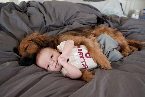 cani abbraccio