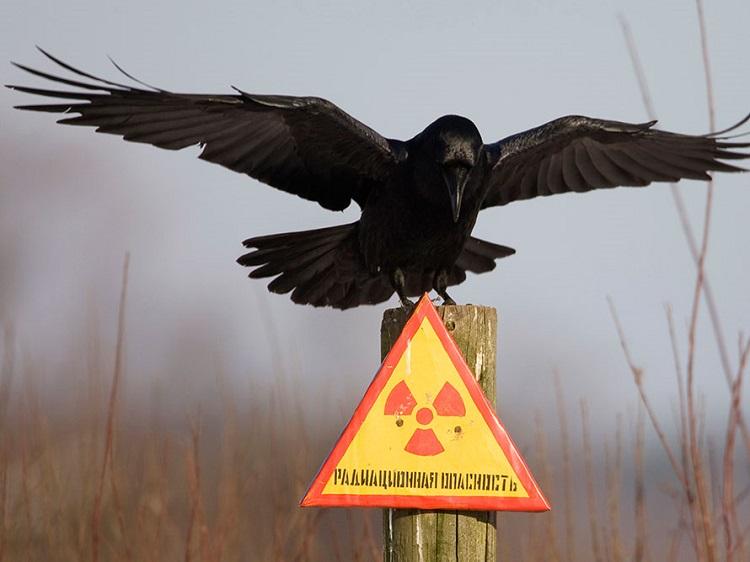 chernobyl (2)