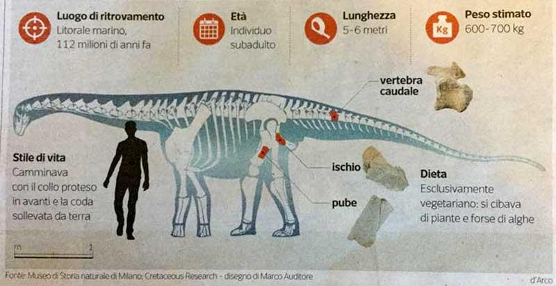 dinosauro sauropode Tito (3)