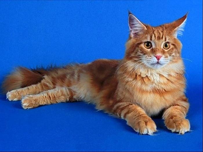 gatto19
