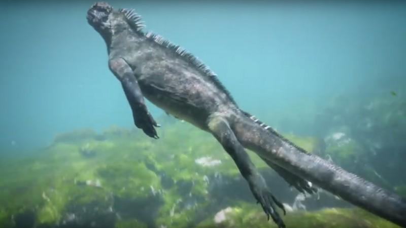 iguana marino godzilla