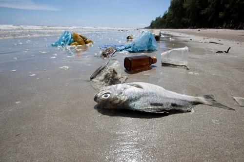 inquinamento plastica in mare