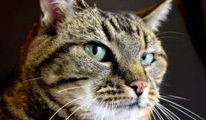 Gatti e dintorni: le più strane storie feline del 2016