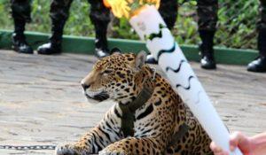 Rio 2016, giaguaro sfila con la torcia olimpica: ucciso dopo aver tentato la fuga – VIDEO