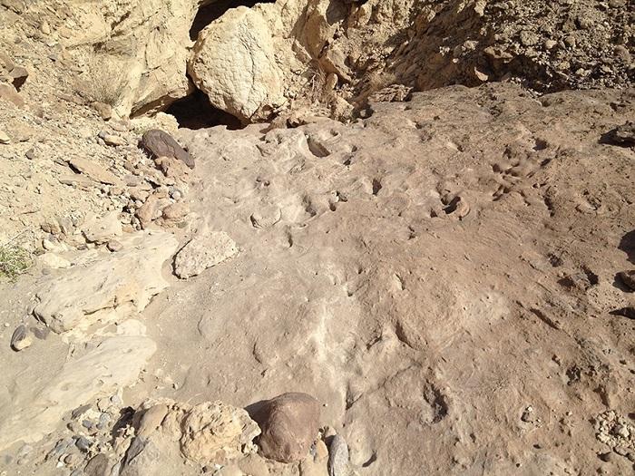 homo erectus impronte due