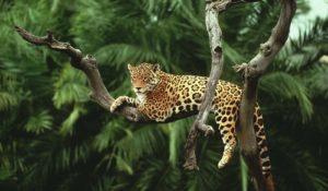 """Amazzonia a rischio. WWF: """"Scompare anche il nostro futuro"""""""