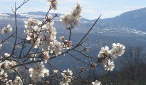 Equinozio di primavera, curiosità sul giorno più felice dell'anno