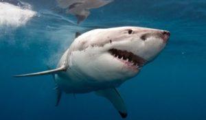 I migliori film sugli squali per un'estate da brividi
