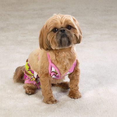 6.Bikini per cani multicolor