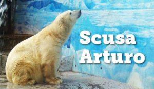 """""""L'orso più triste del mondo"""" è morto dopo 20 anni di prigionia"""