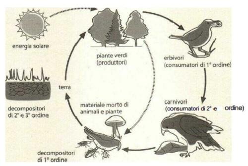 biodiversità ciclo naturale