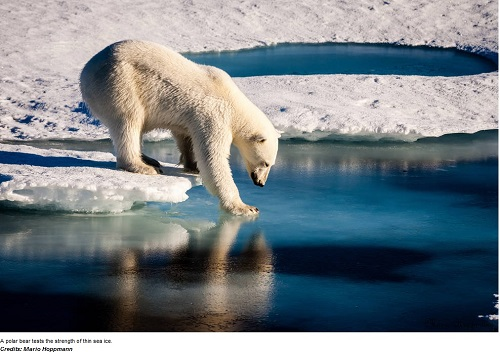 artico-ghiaccio-si-scioglie