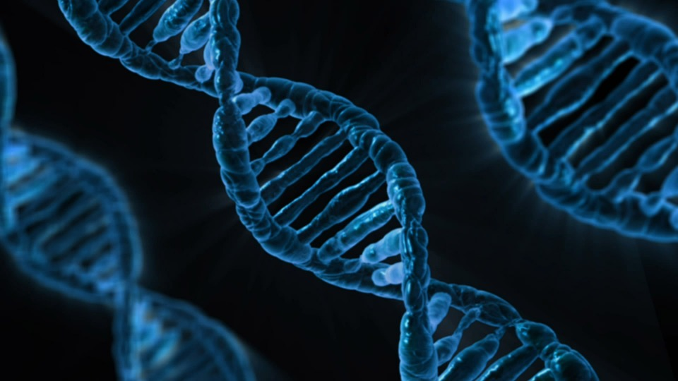 dna-mitocondriale