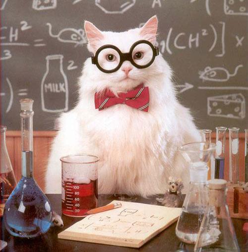 scienza del gatto