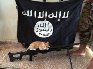fatwa-isis-contro-i-gatti-2