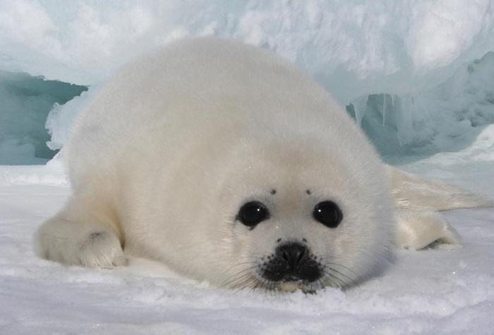 antartide-riserva-marina-del-mare-di-ross