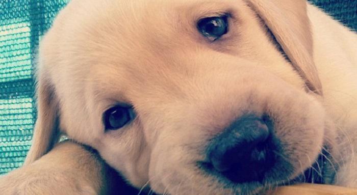 attenzione ai 10 cani più belli del mondo: è una truffa da 5 euro al