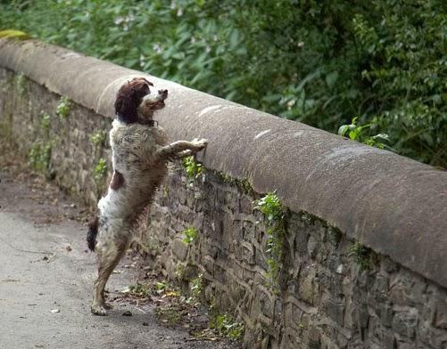 il ponte dei cani suicida