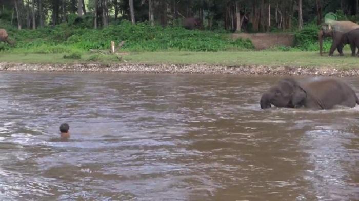 elefantino salva il suo istruttore