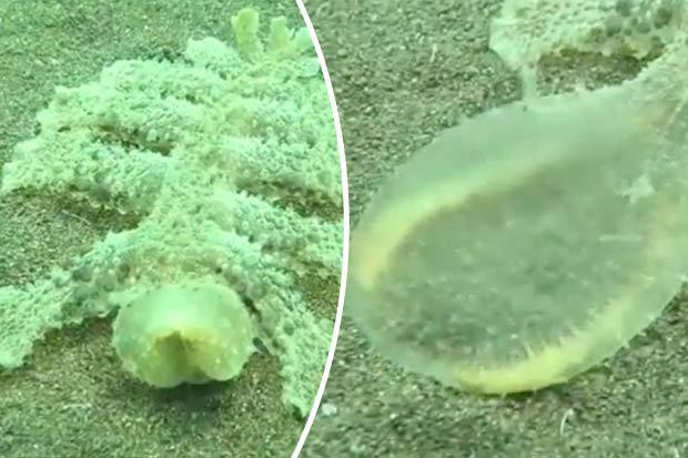 creatura marina di Bali