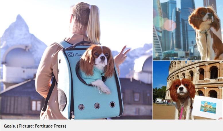 cane-viaggiatore