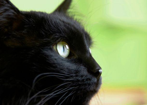 buona nero micio Tumblr bagnato e cremoso nero micio
