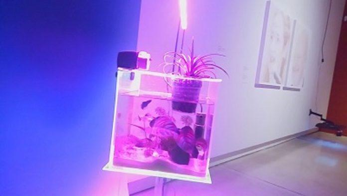lav-pesce-quadriennale