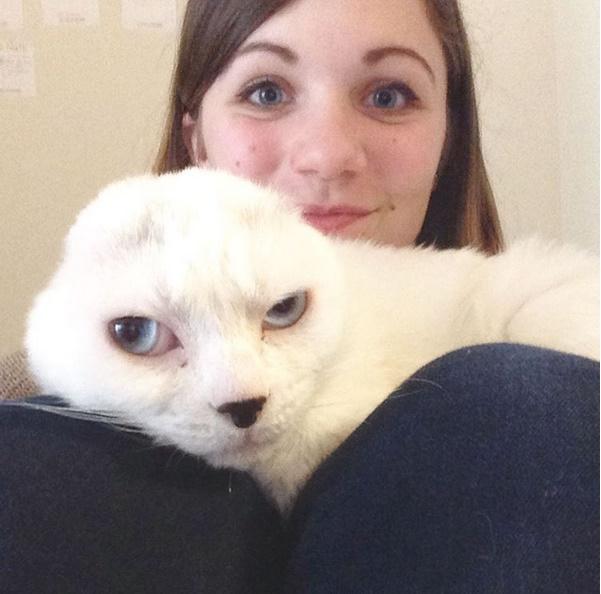 otitis gatto senza orecchie